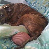 Adopt A Pet :: Tinker - Andrew, IA