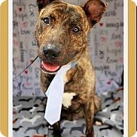 Adopt A Pet :: Teddy - Fort Worth, TX