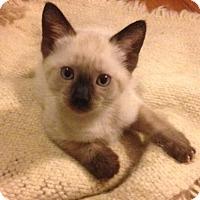 Adopt A Pet :: Aspen (MM) - Trenton, NJ