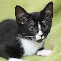 Adopt A Pet :: Rocky S - Raleigh, NC
