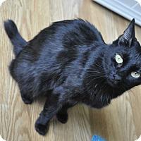 Adopt A Pet :: BUNNY- Affectionate cat *VIDEO - New Smyrna Beach, FL