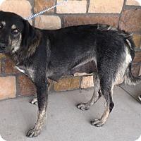 Adopt A Pet :: Maggie - Artesia, NM
