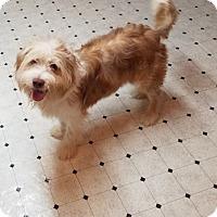 Adopt A Pet :: HARLEY - Stamford, CT