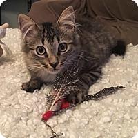 Adopt A Pet :: Luke - Turnersville, NJ