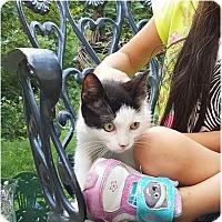 Adopt A Pet :: Seeward - Newtown, CT