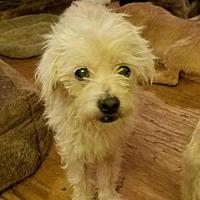 Adopt A Pet :: HUNTER -16 - Lithia, FL
