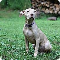 Adopt A Pet :: RJ - Reisterstown, MD