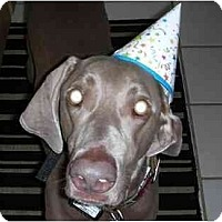 Adopt A Pet :: Bruno - Eustis, FL