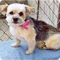Adopt A Pet :: Ginger - Clementon, NJ