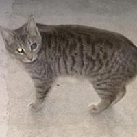 Adopt A Pet :: AnnaBella - Sparta, WI