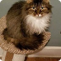 Adopt A Pet :: Huan - Cleveland, OH