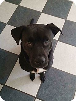 Labrador Retriever Mix Dog for adoption in Jacksonville, Florida - Zena