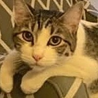 Adopt A Pet :: Turbo - LaJolla, CA