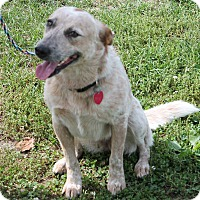 Adopt A Pet :: Dixie - Lebanon, CT