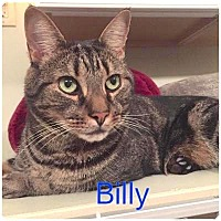 Adopt A Pet :: BILLY - Hamilton, NJ