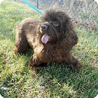 Adopt A Pet :: Sassy -Adopted! - Kannapolis, NC