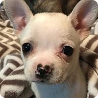 Adopt A Pet :: Glenda#3F - Orlando, FL