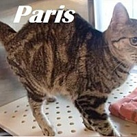 Adopt A Pet :: Paris - Beaumont, TX