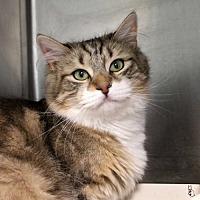 Adopt A Pet :: Pete - Paris, ME