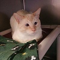Adopt A Pet :: Gabriel - Chippewa Falls, WI