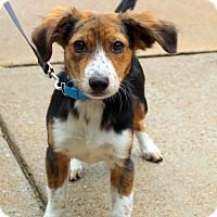 Adopt A Pet :: Lola Mae~adopted! - Glastonbury, CT