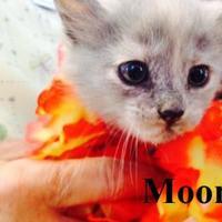 Adopt A Pet :: MOON - Franklin, NC