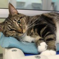 Adopt A Pet :: Gemma 8103 - Columbus, GA