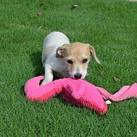 Adopt A Pet :: Dorothy - Winder, GA
