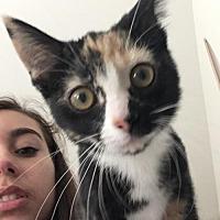 Adopt A Pet :: Calista  171834  (Hurricane) - Atlanta, GA