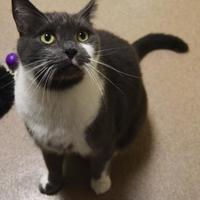 Adopt A Pet :: Neptune - Oshkosh, WI