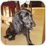 Photo 2 - English Springer Spaniel Mix Dog for adoption in Troy, Michigan - Lizzie