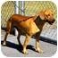 Photo 2 - Dachshund Mix Dog for adoption in Washington, North Carolina - Bucky