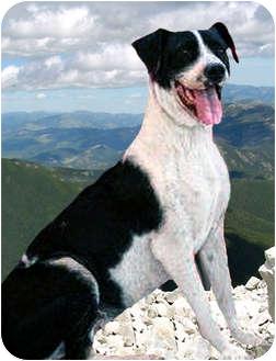 Pointer Mix Dog for adoption in El Cajon, California - KAYLA