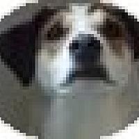 Hound (Unknown Type) Mix Dog for adoption in Marion, North Carolina - Cooper