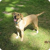 Adopt A Pet :: Bella - Elyria, OH