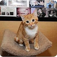 Adopt A Pet :: Tang - Farmingdale, NY
