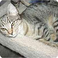 Adopt A Pet :: Dolly - Colmar, PA
