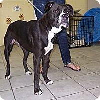 Adopt A Pet :: Freddy - Crawfordville, FL