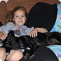 Adopt A Pet :: Rosie - Reisterstown, MD