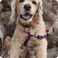Adopt A Pet :: Carlton - Sugarland, TX