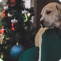 Adopt A Pet :: Neville - Gadsden, AL