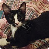 Adopt A Pet :: Keely - North Highlands, CA