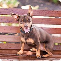 Adopt A Pet :: Wallie - Syracuse, NY