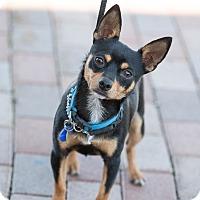 Adopt A Pet :: Mouse - Syracuse, NY