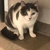 Adopt A Pet :: Rose - Boca Raton, FL