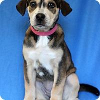 Adopt A Pet :: Buff - Waldorf, MD