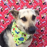 German Shepherd Dog Mix Dog for adoption in Irvine, California - PALOMA