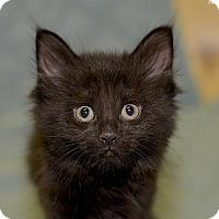 Adopt A Pet :: Mary - Medina, OH
