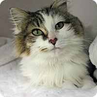 Adopt A Pet :: Annabelle - Paris, ME
