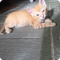 Adopt A Pet :: Cosmo - Metairie, LA